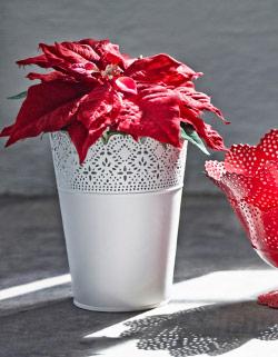 Macetero skurar de Ikea. La poinsettia es una flor que no puede faltar en estas fechas
