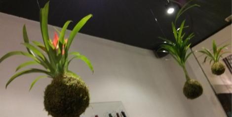 Plantas de Verde-arte sin maceta. Una idea original para sorprender a los invitados